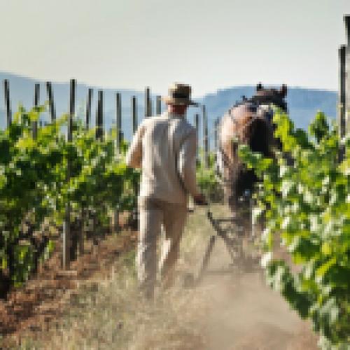 Celler Credo, vins biodiversitat